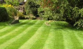 Yard Maintenance Services